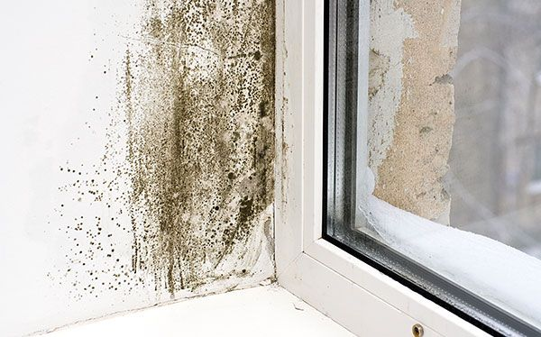 Black mould by window