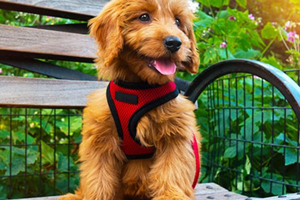 Best Dog Harnesses Which