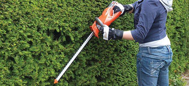 When should I cut a yew hedge?