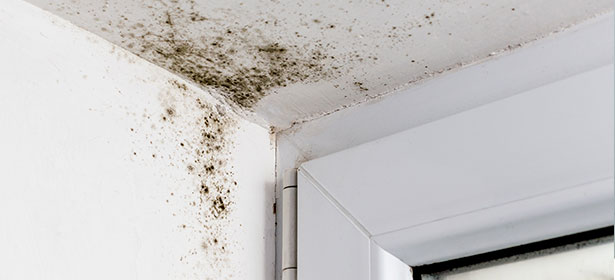 damp and mould on wall