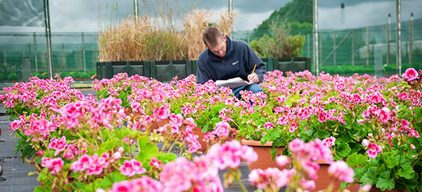 Which? controlled-release fertilisers tests