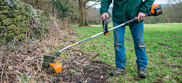 cutting brambles with a grass trimmer