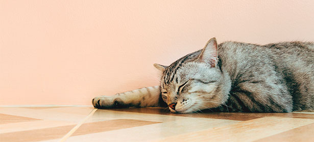 Sleeping cat on floor 484217