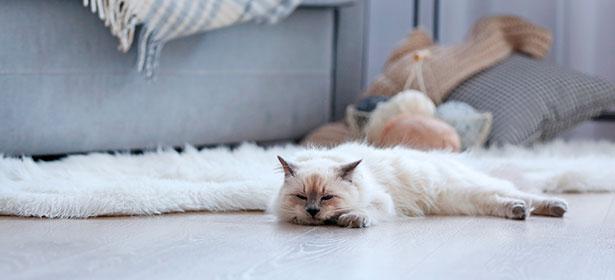 Cat cosy on heated floor 484215