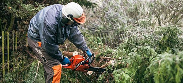 Chainsaw cutting in amongst ferns