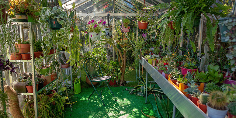 Large greenhouse with lots of plants