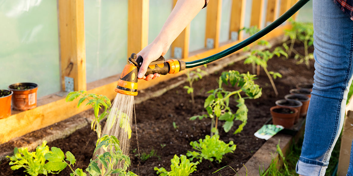 Hose watering plants