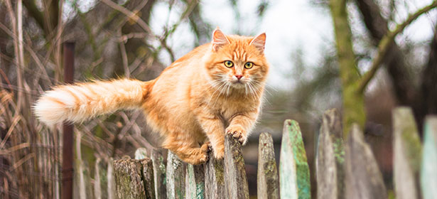 Cat on fence 443428