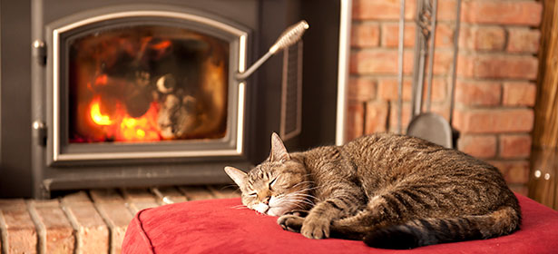 Cat in front of wood burning stove 452409