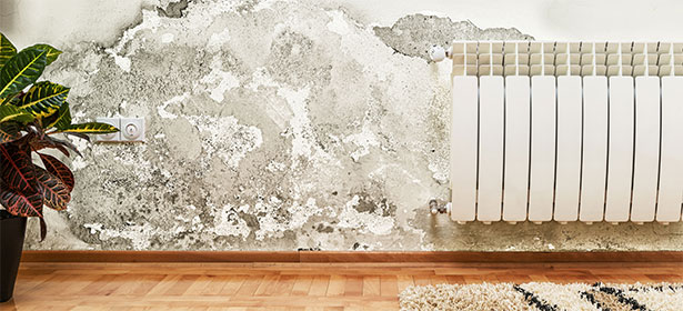 Treating mouldy wall 435877