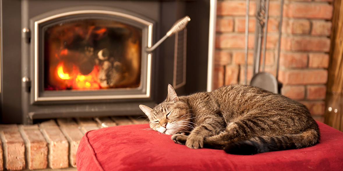Cat asleep in front of a gas fire