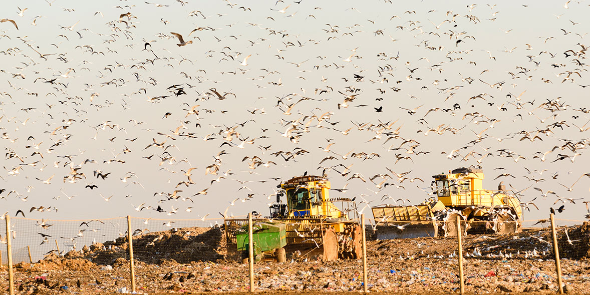 Landfill site with diggers and gulls