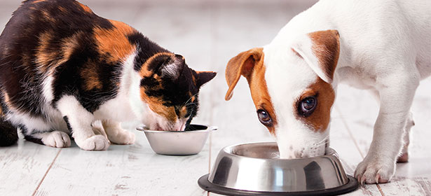 Cat and Dog lifestyle 3
