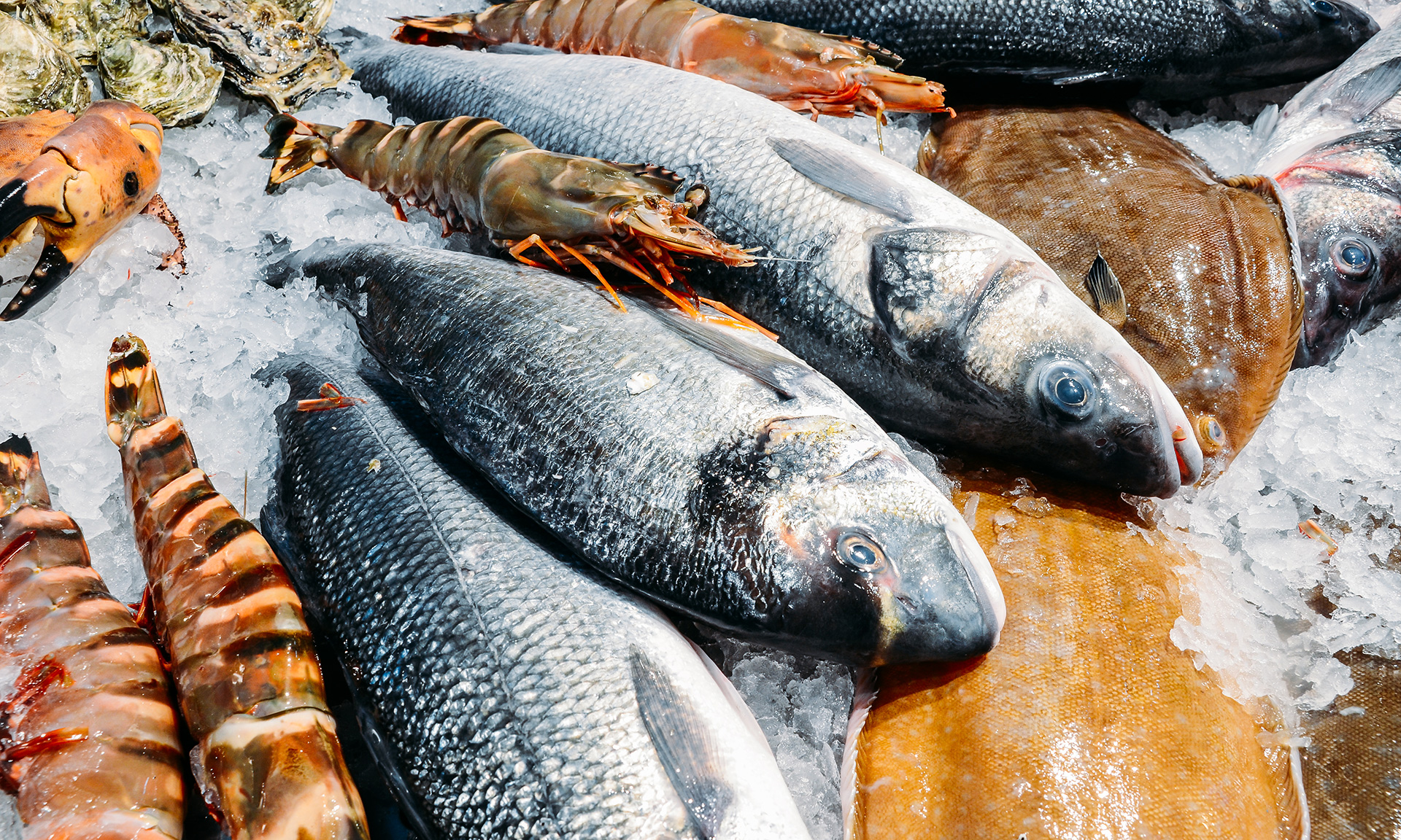 fish on fish counter in ice