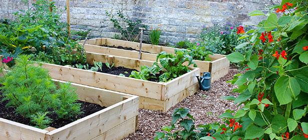 Veg patch garden