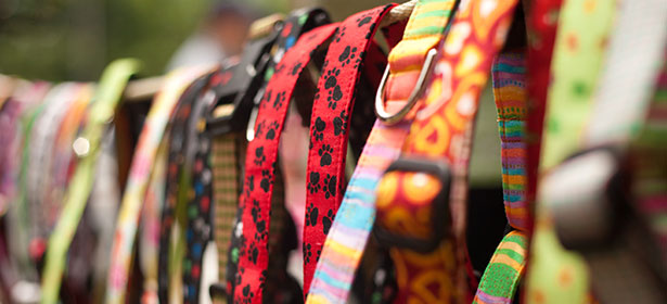 collection of colourful dog harness