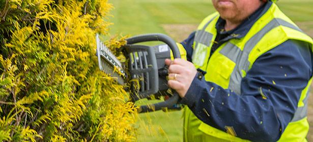 Cutting using a petrol hedge trimmer 445519