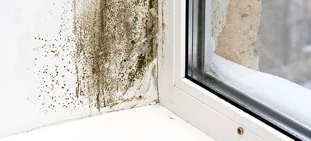 Mould on a window