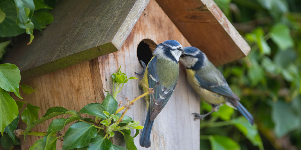 Best bird nest boxes
