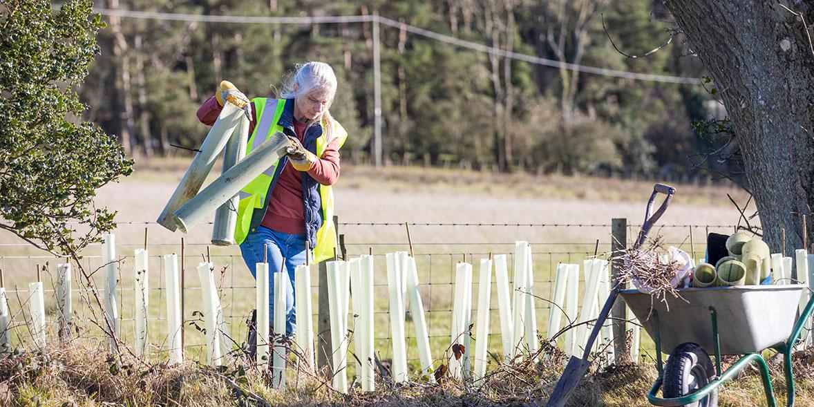 Woman planting tree saplings